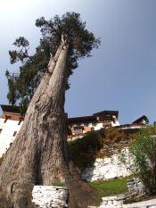 Tall tree house