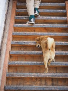 Stair dog walker