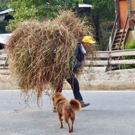 Man carrying straw with doggie pal